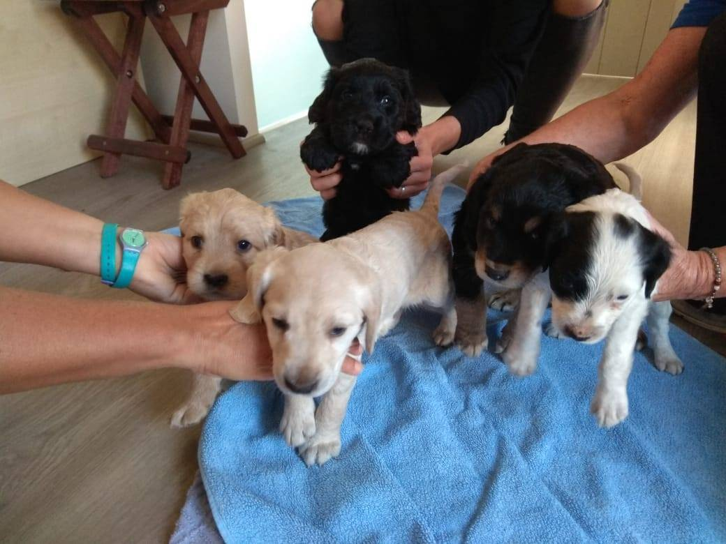 Abandoned Puppies - Oct 2018