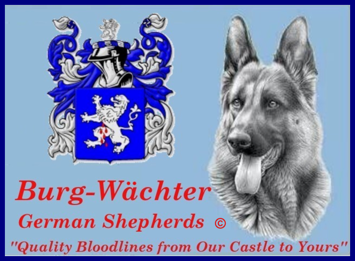 Burg-Wachter German Shepherds, 68 tom town hollow rd., Corbin, Kentucky, 40701, United States