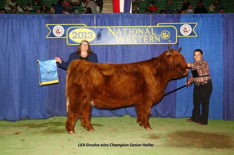LEA Grusha, Champion Senior Heifer