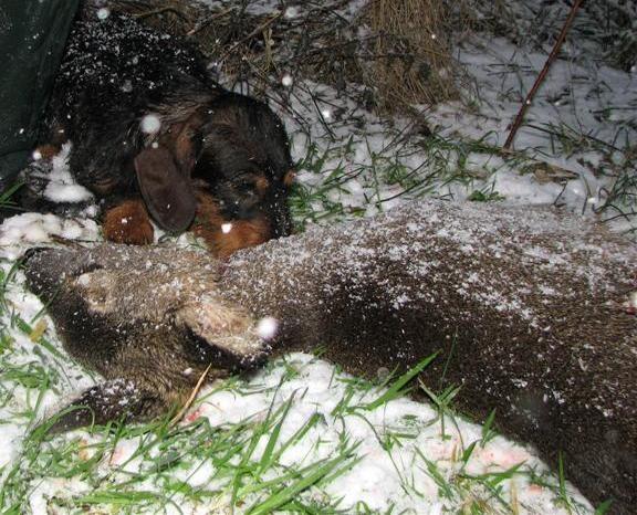 Ib,  with doe in Jan snow