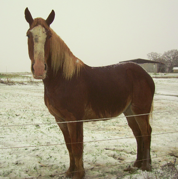Nico's 1st Snow! Feb, 2015