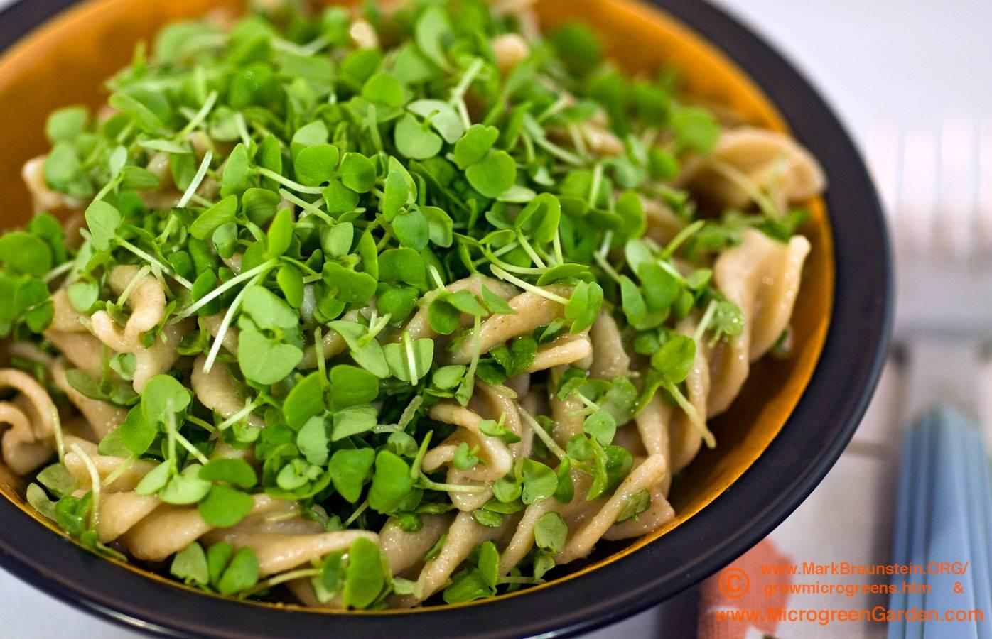 pasta and pesto - BASIL microgreens, 7 1/2 days since sown