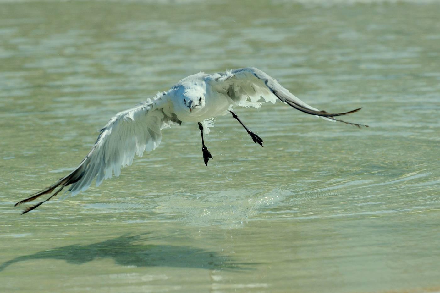 Séquence de bain - Gulls taking a bath