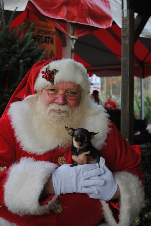 Nala and Santa