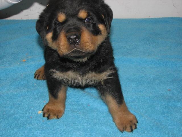 Puppies at 5 weeks...