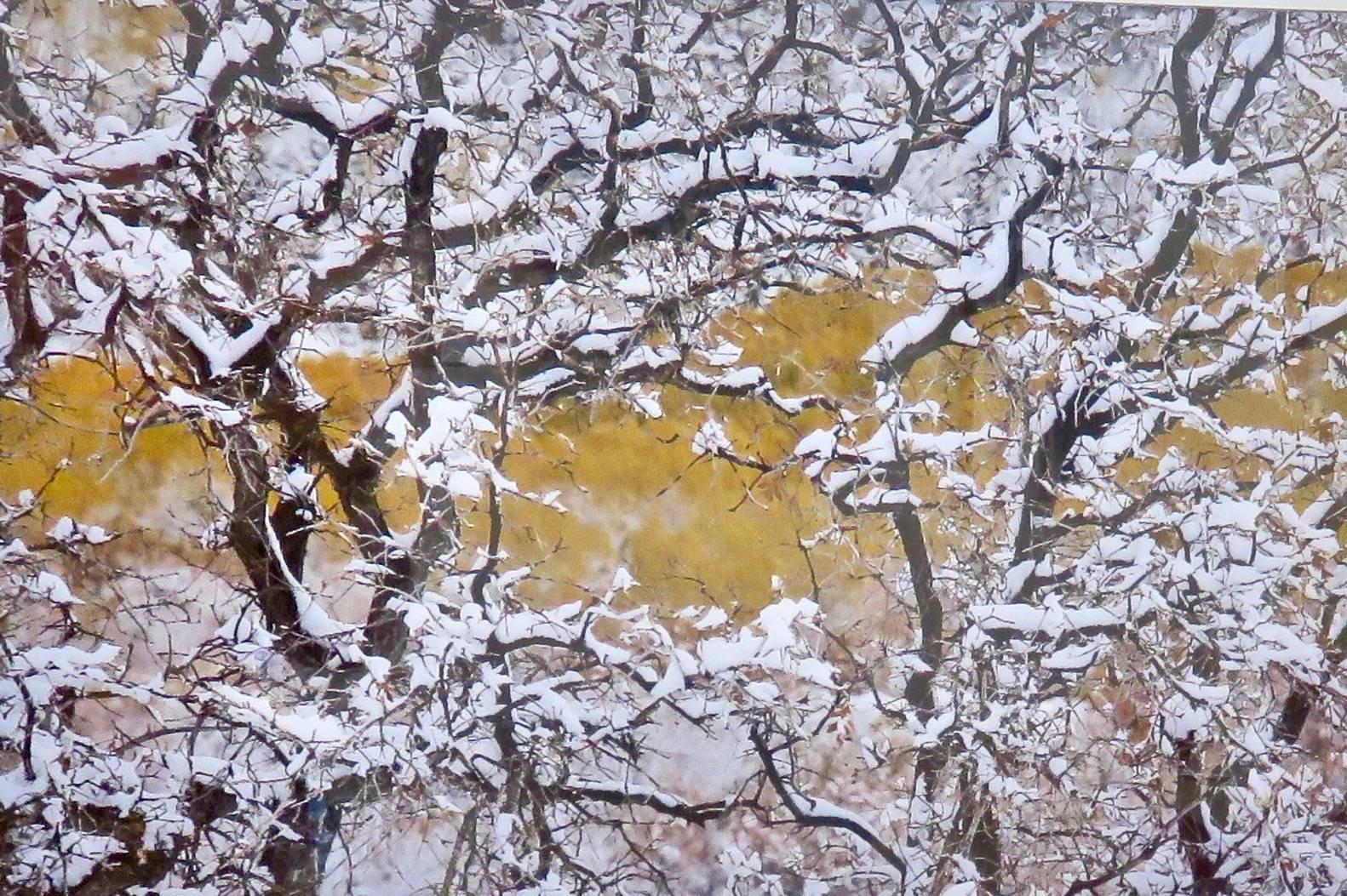 Early Snow - Greenslake Marsh