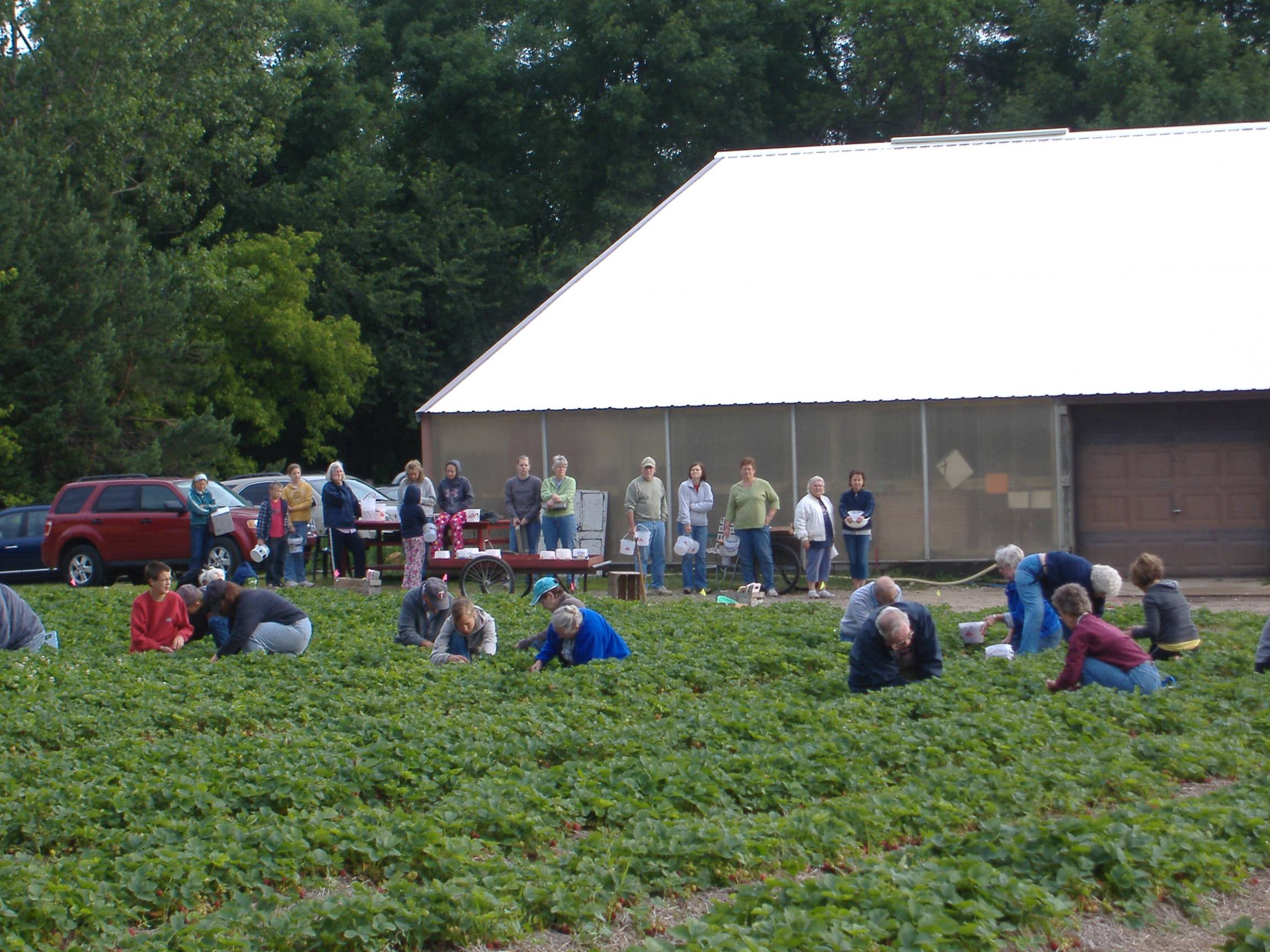 Pickers lined up to go out picking