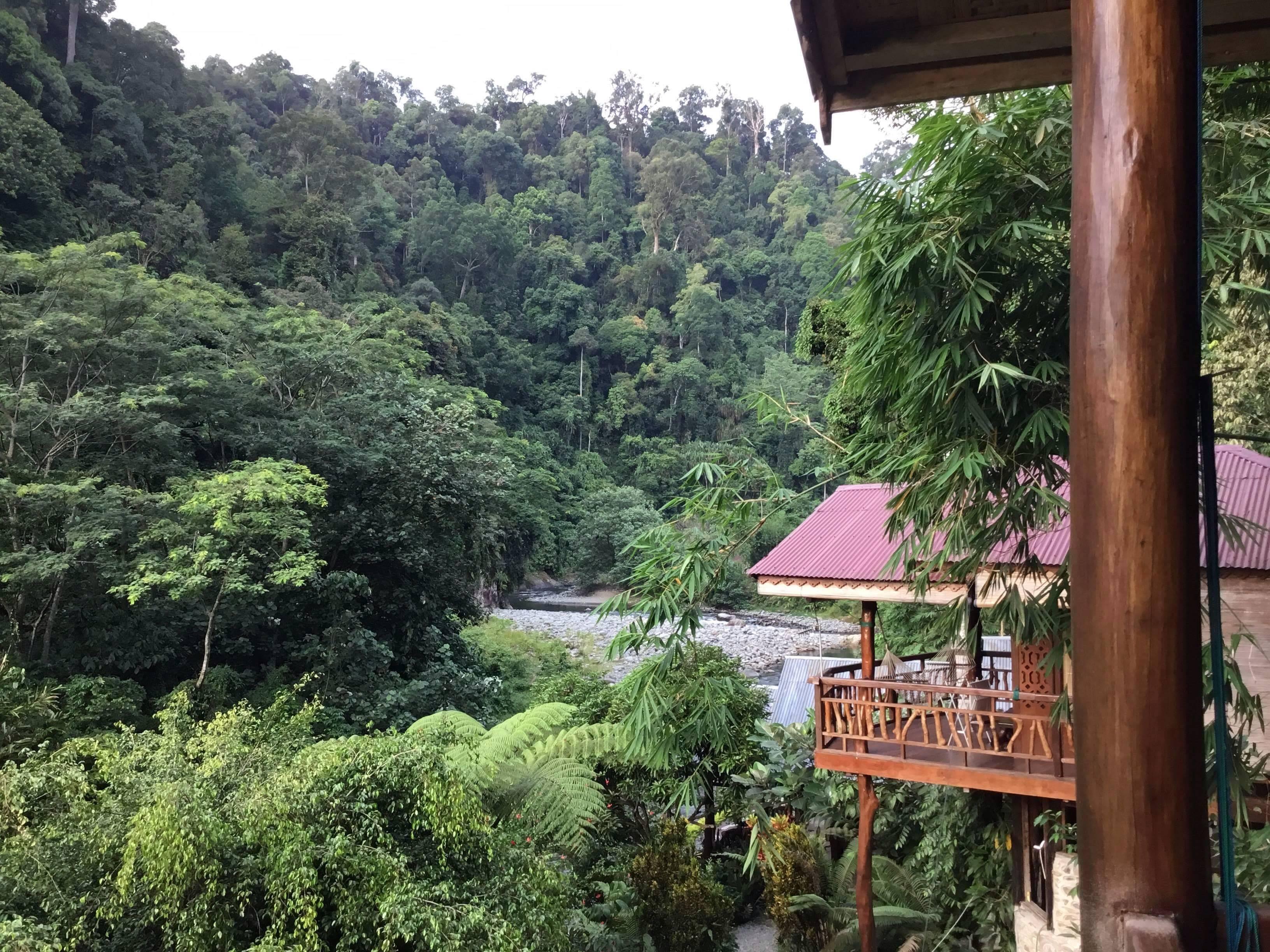 Orangutan Room balcony view