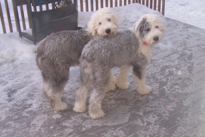 Murphy & Sierra