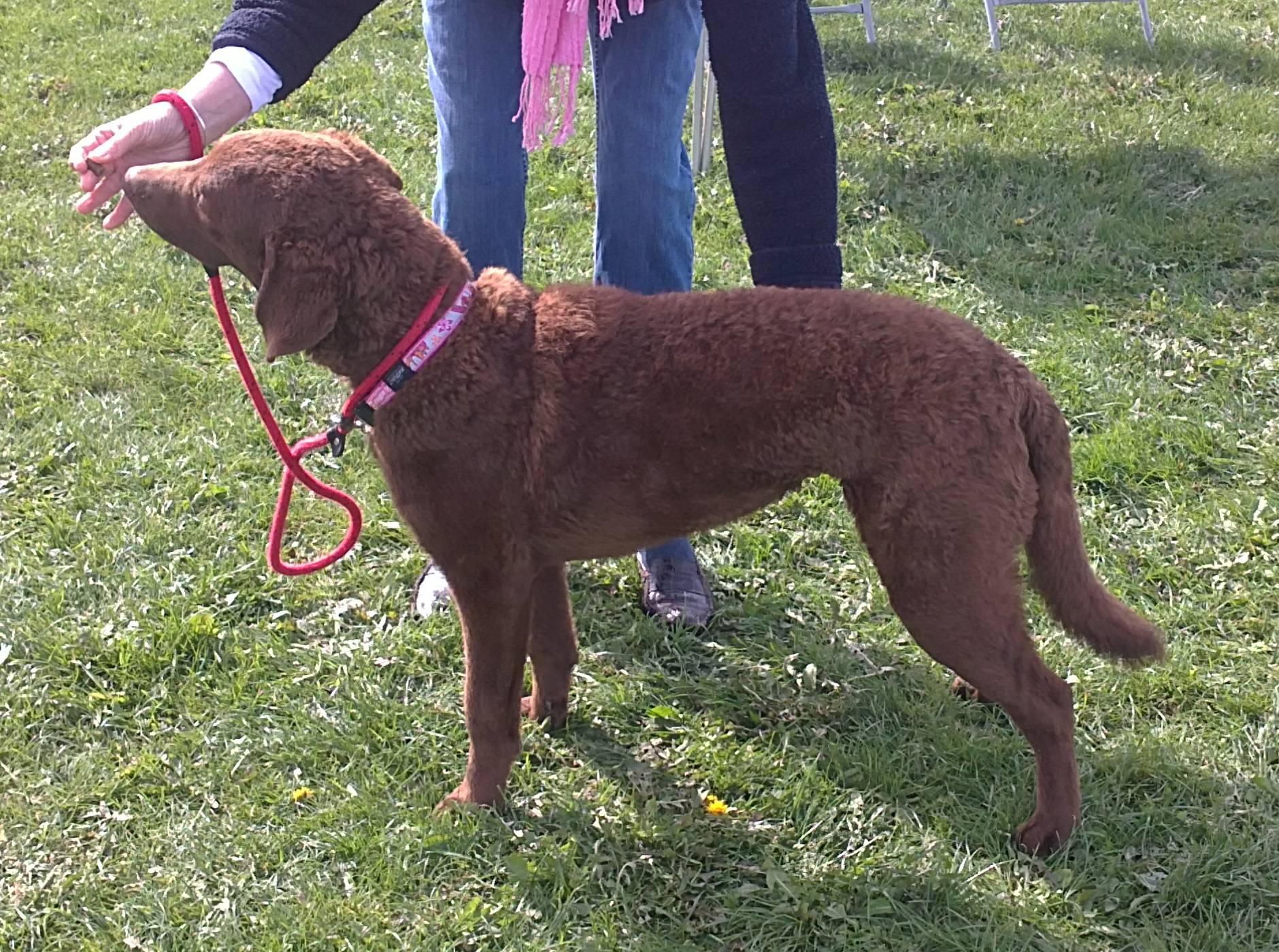 Lola April 2011