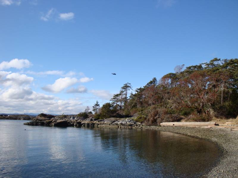 Helicopter over Discovery Island.