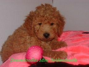 Lola's Female 8 weeks