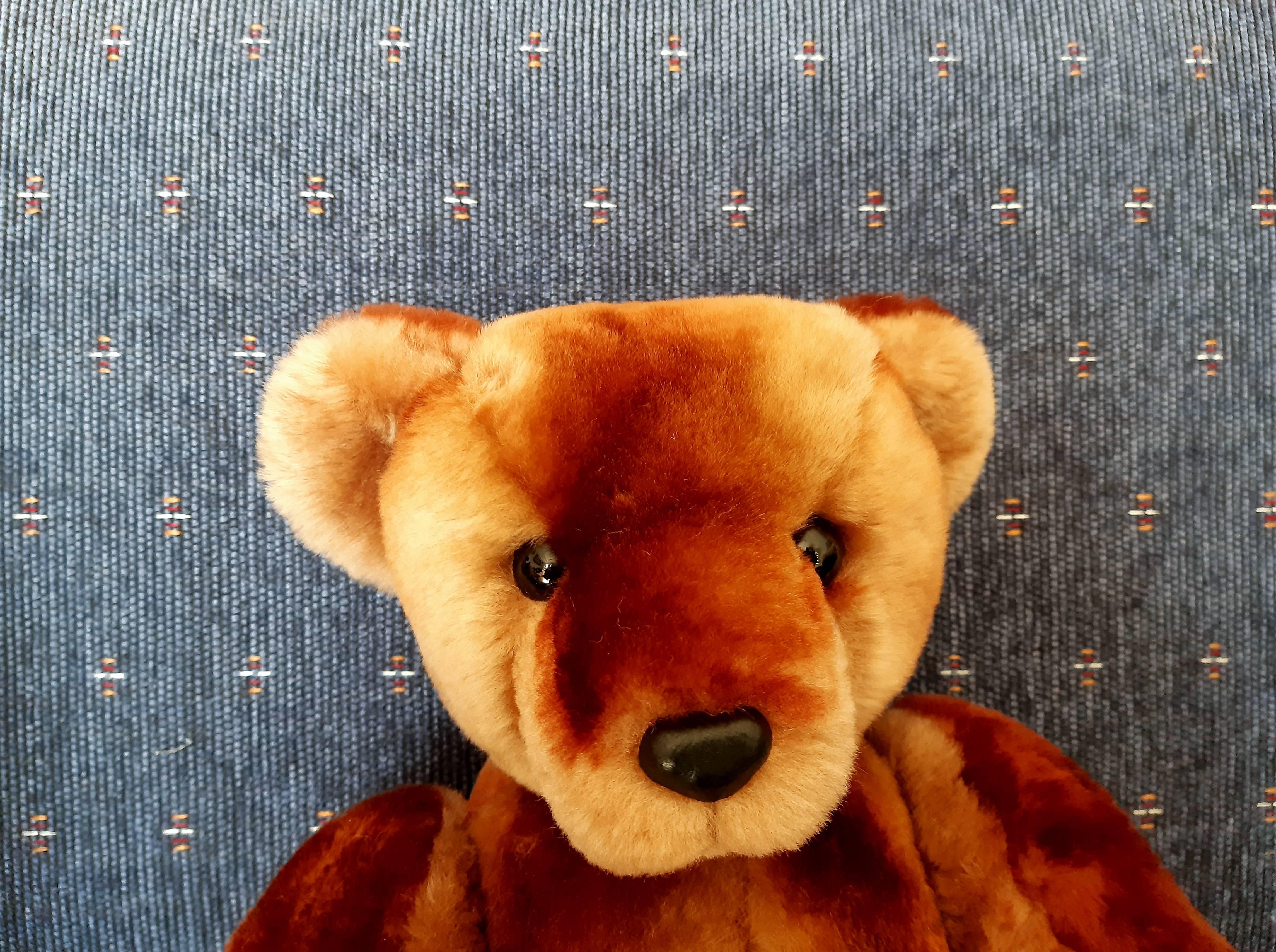 Sonny Bear