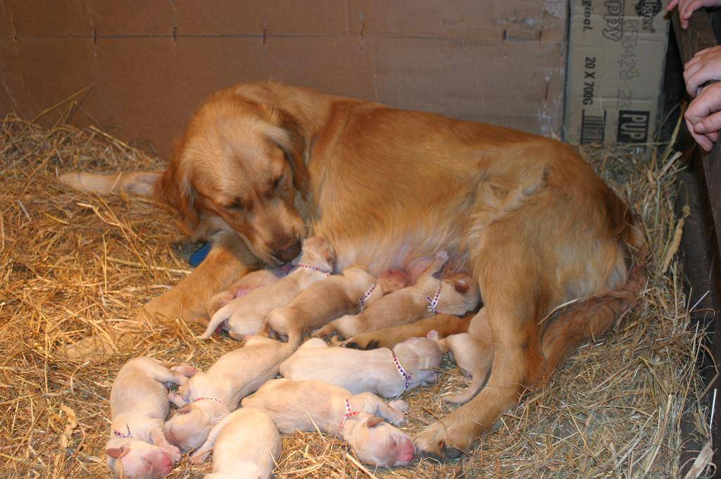 Darby & Pups