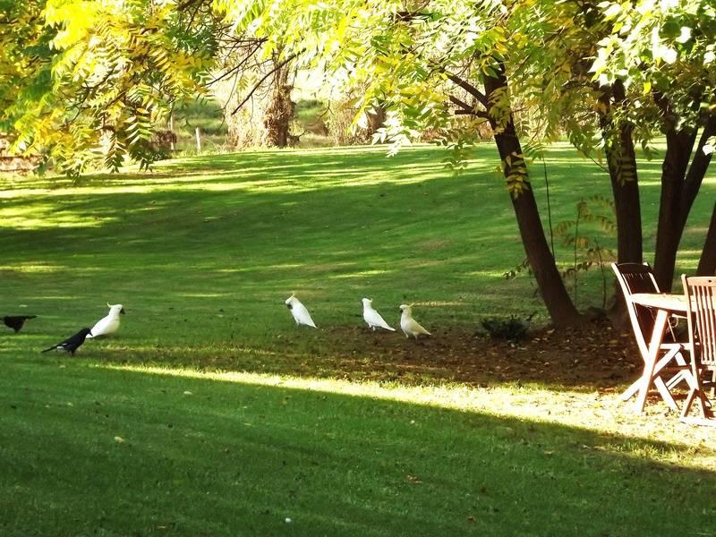 Feathered Feeding