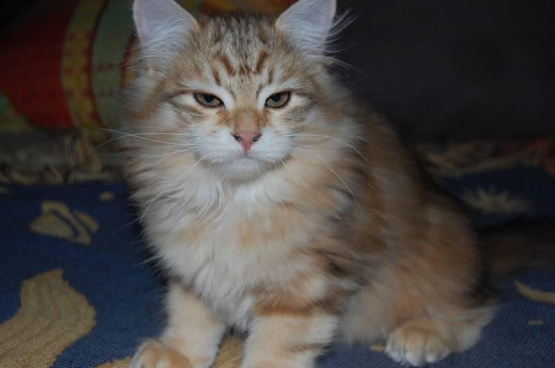 Her har vi en av hannene i kullet, herlig katt!