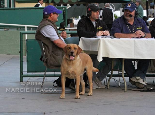 Alan Sherman's Dog