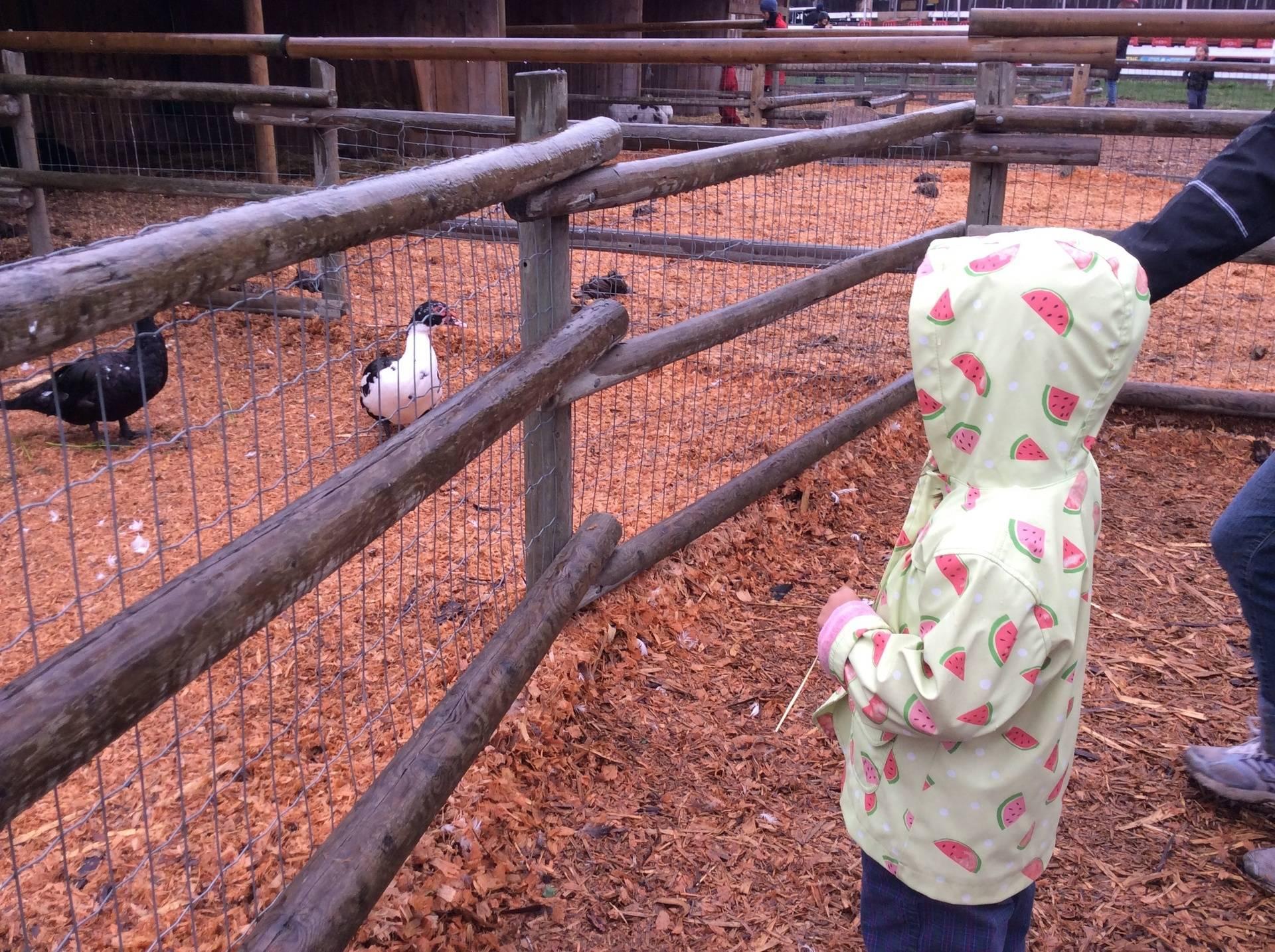 Galey Farms