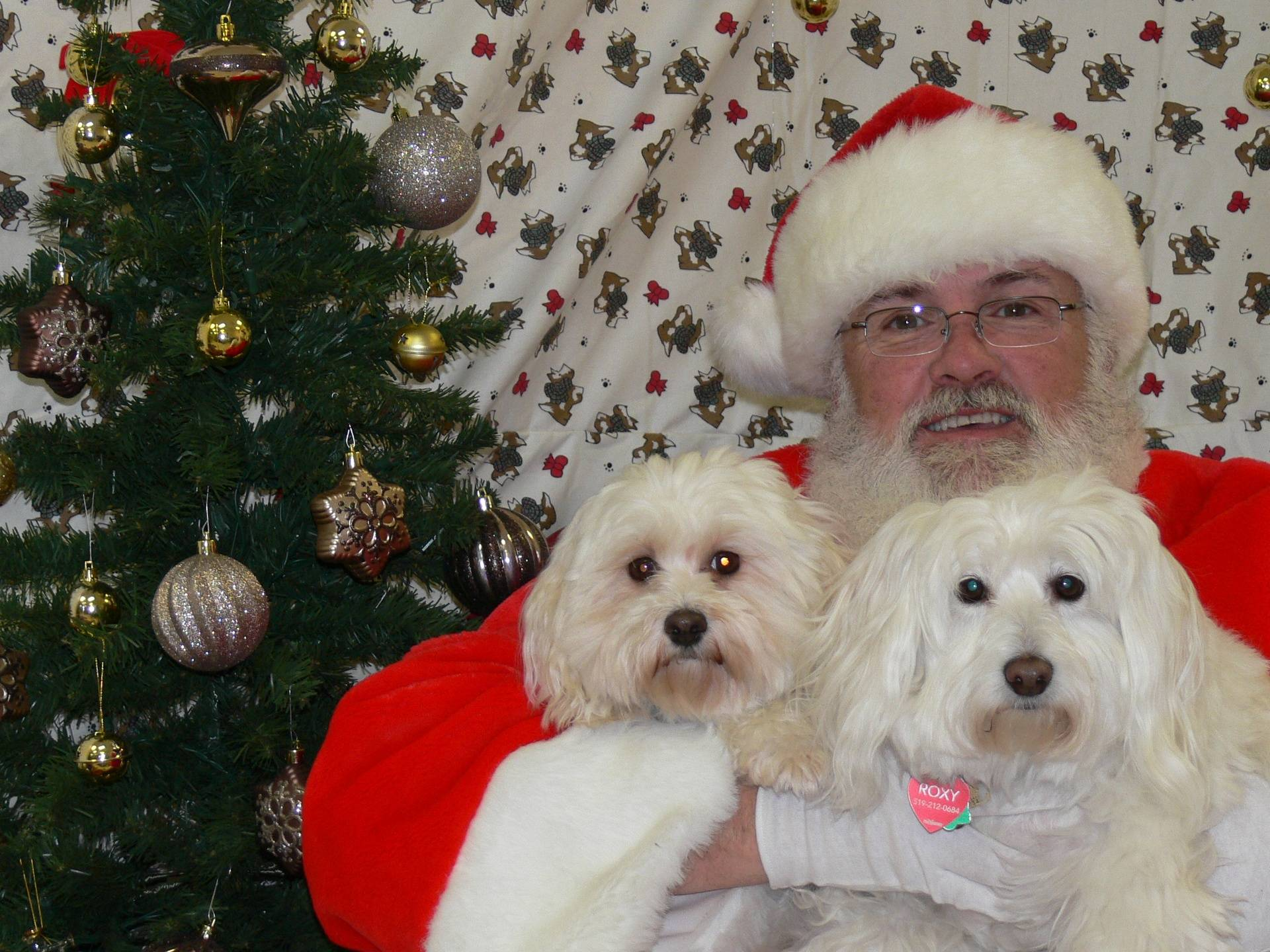 Roxy, Abby and Santa