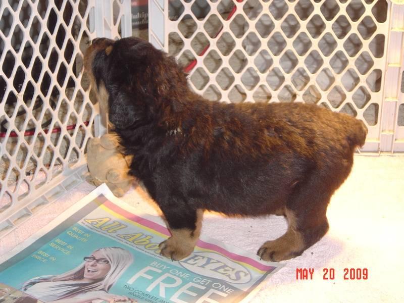 puppy 4 weeks
