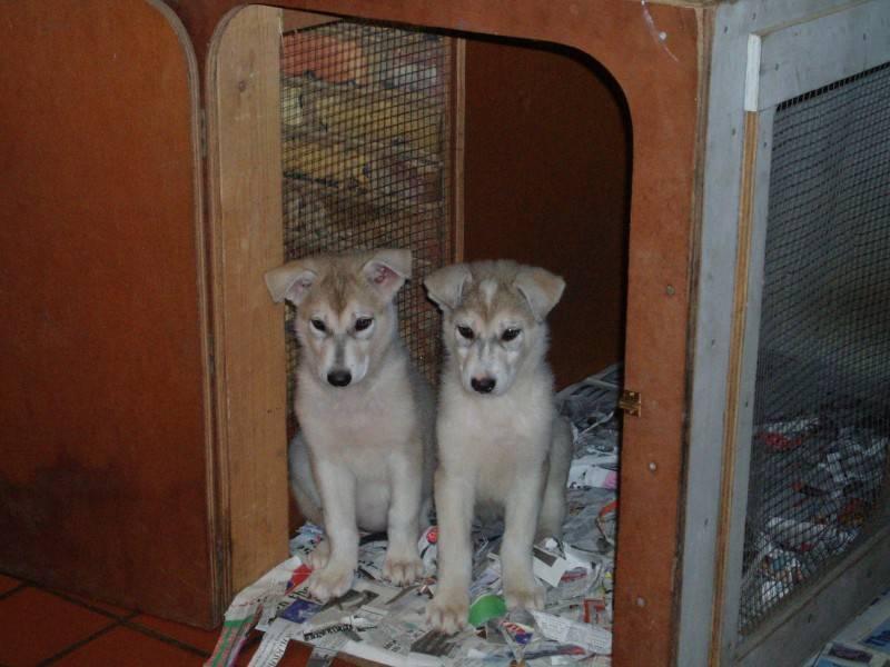 Baby anya and saskia
