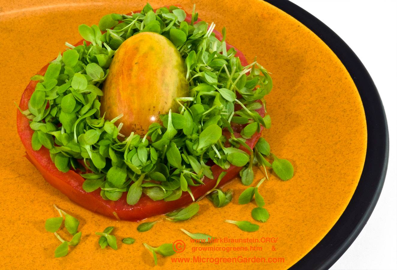 LETTUCE and tomato sandwich (oakleaf lettuce microgreens, 8 days since sown)