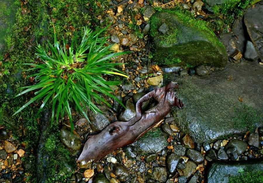 Rainforest Floor - Detail