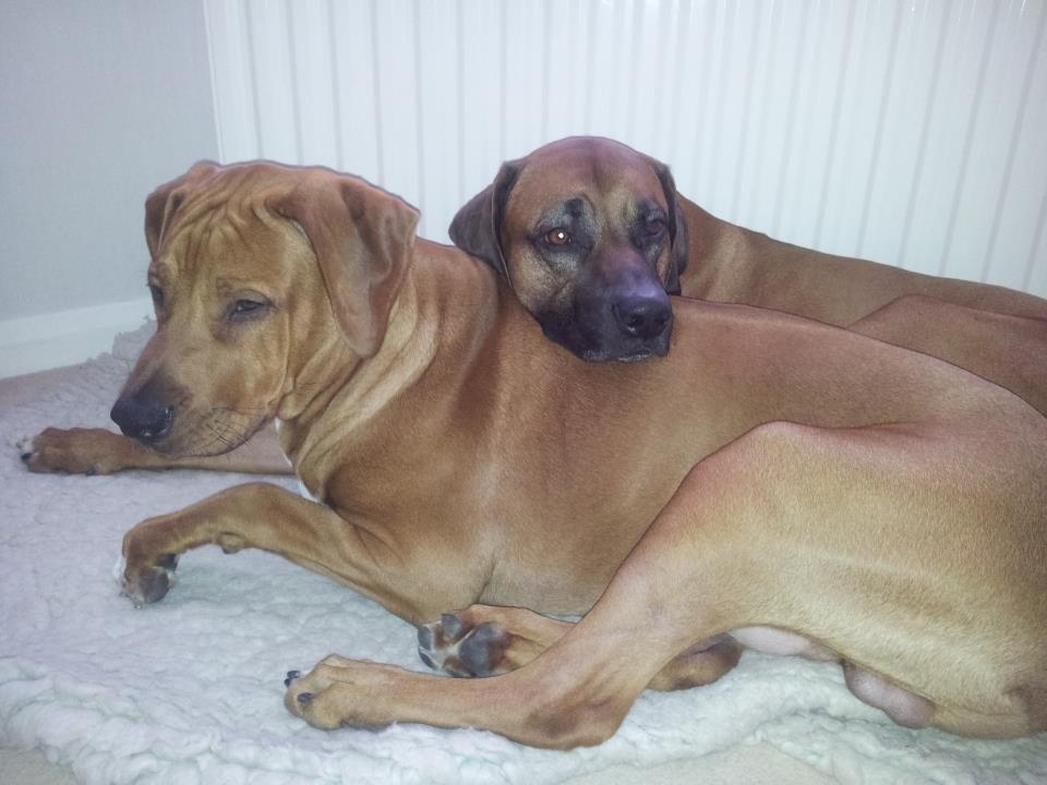 Remus as a pillow for Zeus