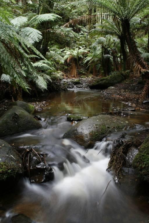 Murrindindi Rainforest Walk - falls