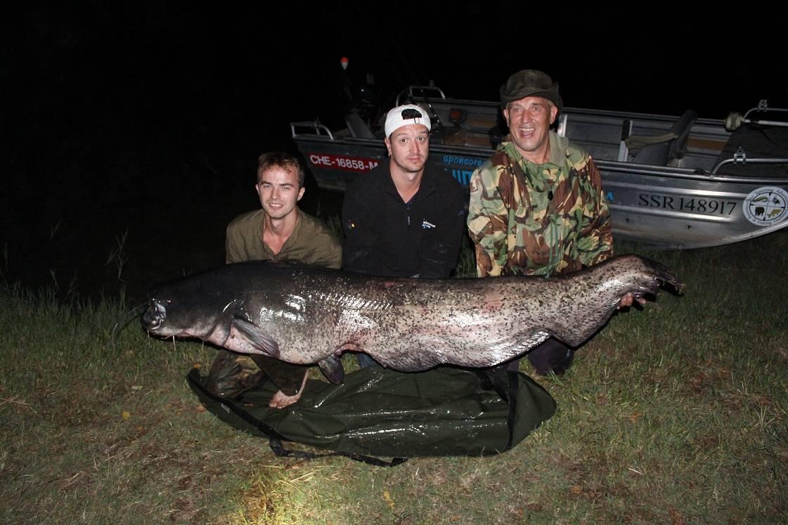Johns 196lb wels catfish