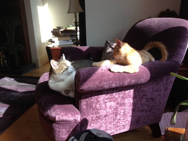 Gatki with his new brother Sam