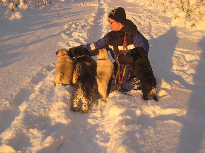 Meg & hundene