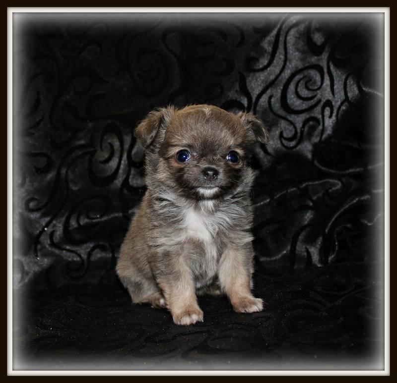 Lola/Bentley girl