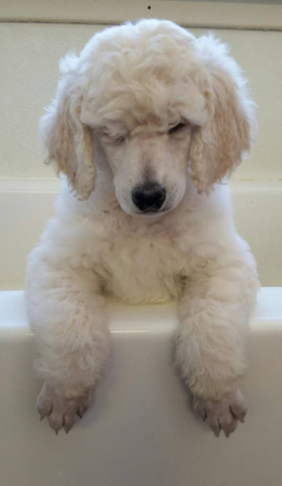 Puppy Bath Time