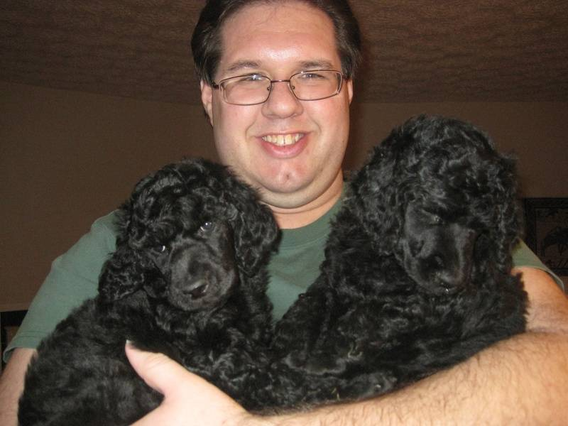 The black males - Wilson and Orso.  6 weeks old.