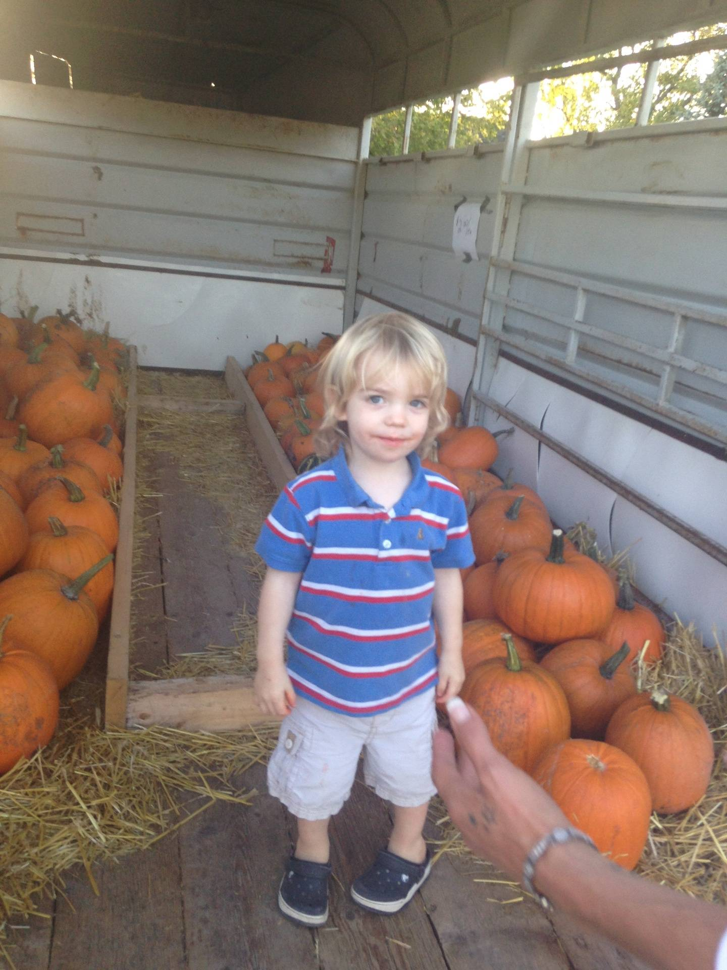 Come pick a pumpkin for Halloween!