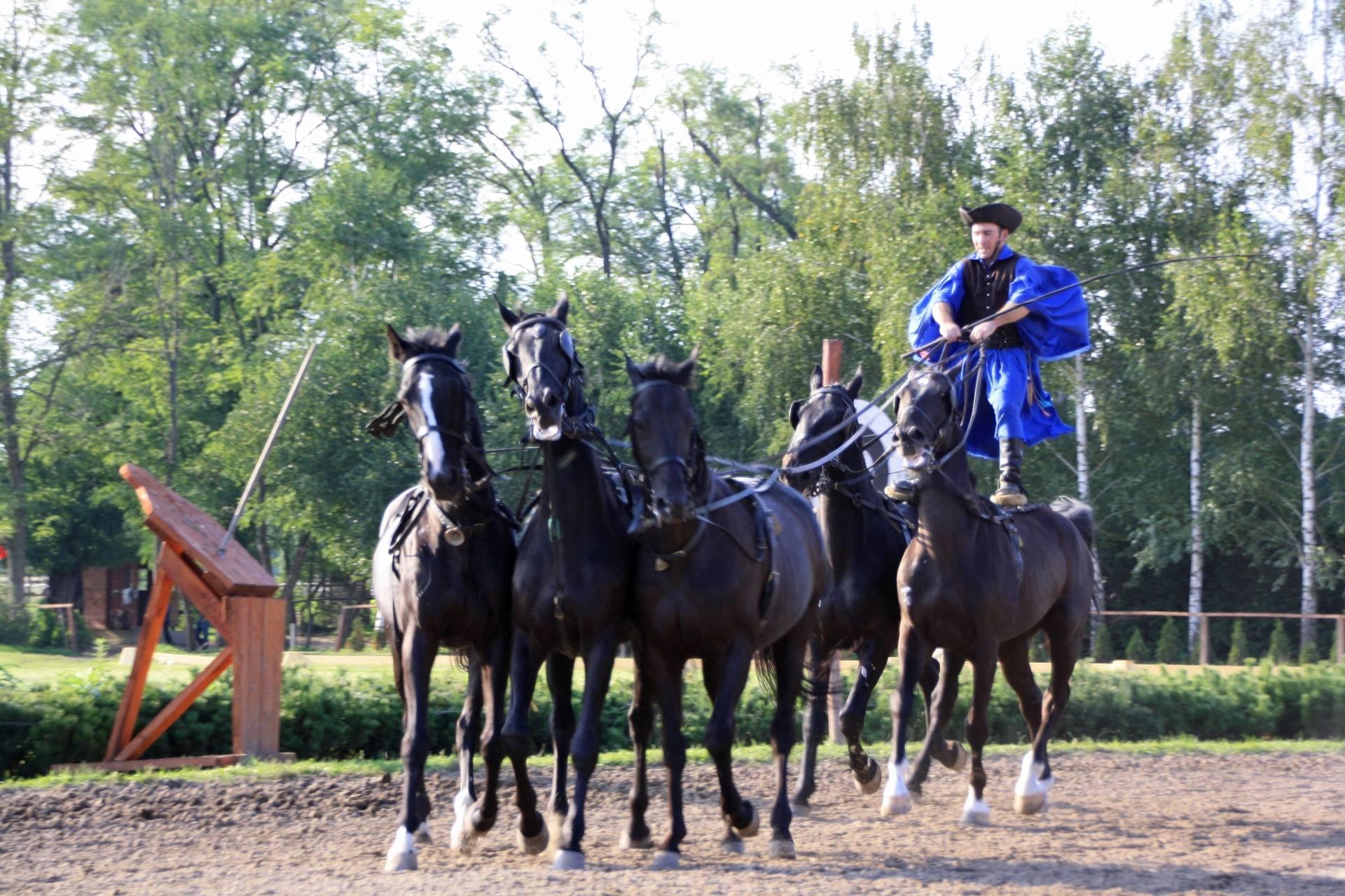 Horse show near Budapest