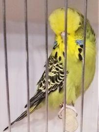 FORT WORTH BIRD CLUB