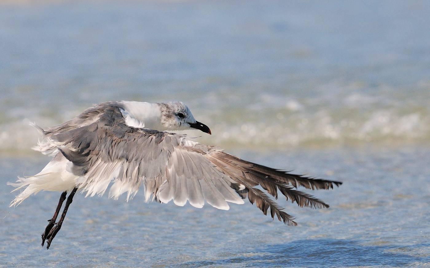 Sortie de bain - Wet gull