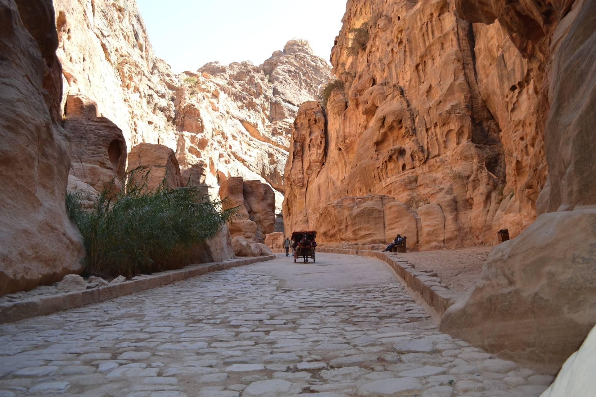 Horse Path