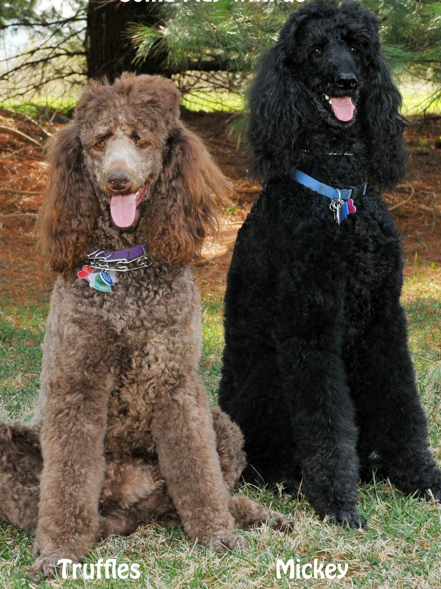 Truffles with his buddy Mickey.  16 months old.