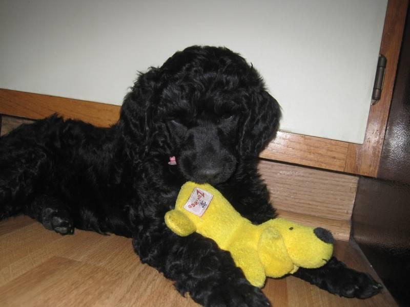 Dewey.  6 weeks old.