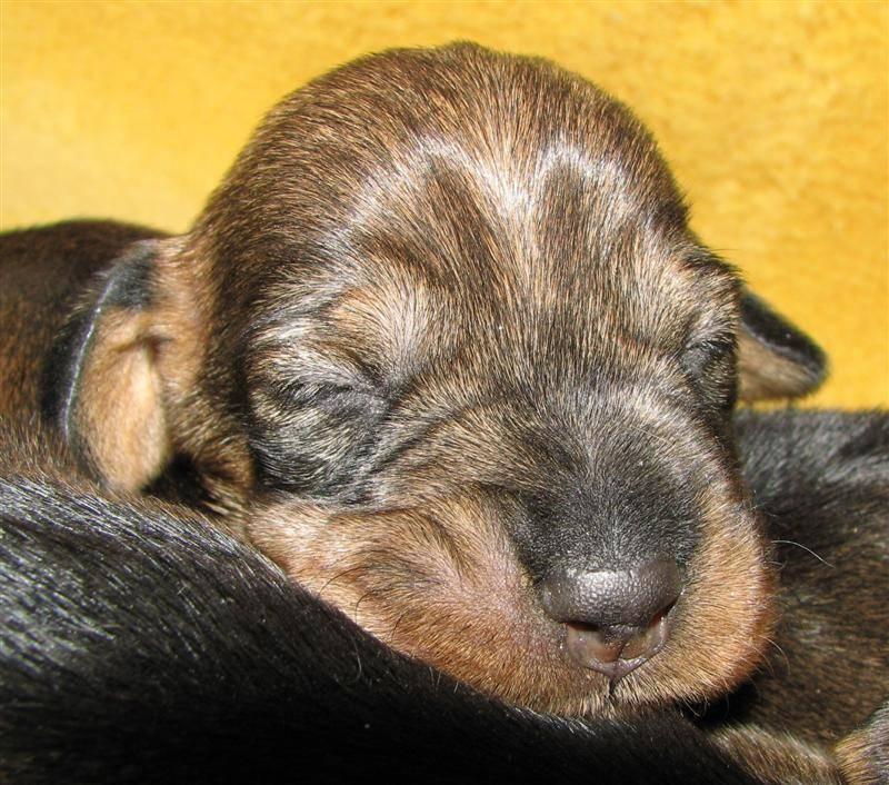 pup 7 days 7