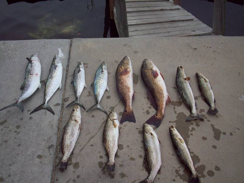 4 Macks,2Reds,6Trout