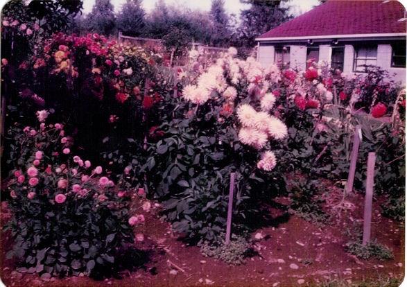 1965-Our First Dahlia Garden