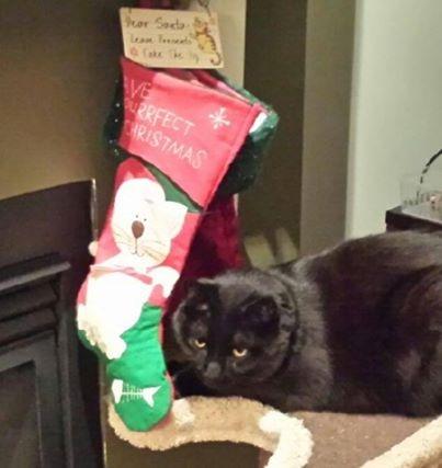 Motley at Christmas