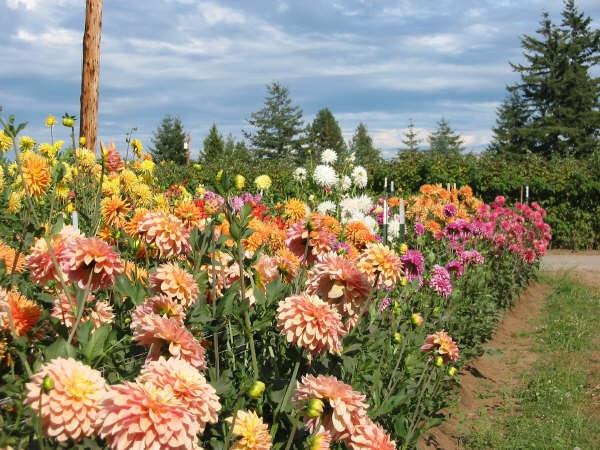 2002 2nd year seedlings East