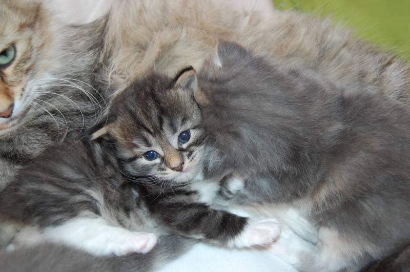 Mor og barn!