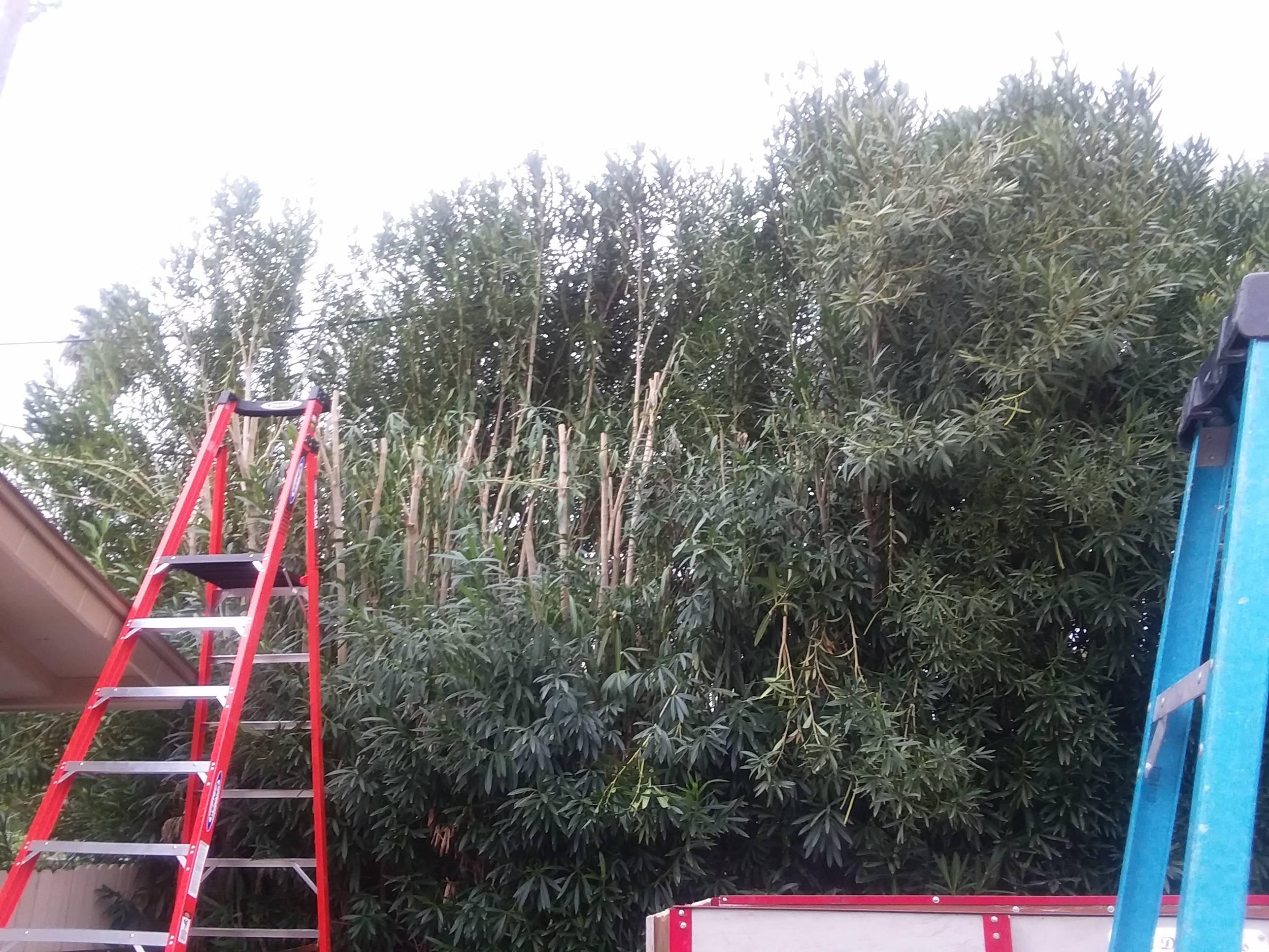 new ladder