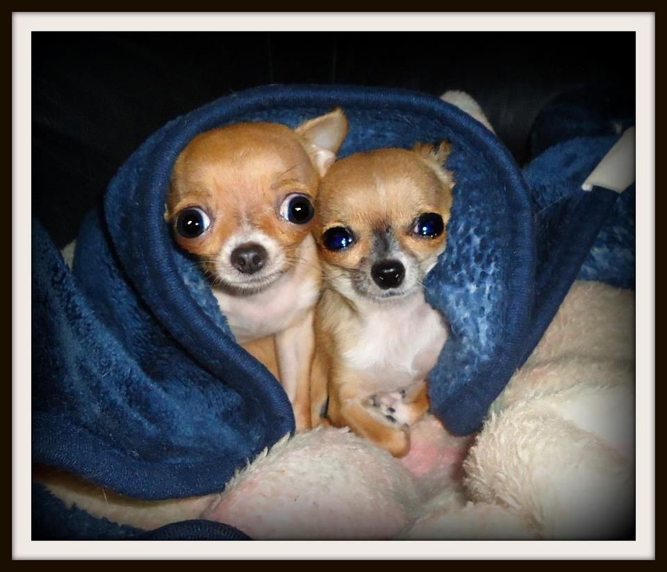 Zuri and Pita cuddling